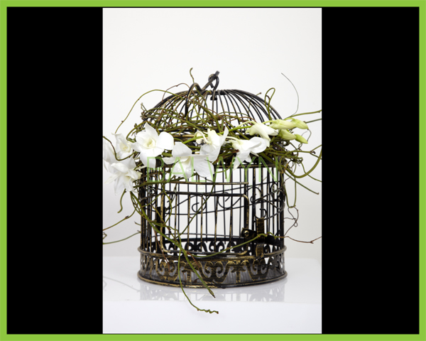 small gold bird cage